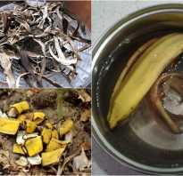 Кожура банана как удобрение для цветов