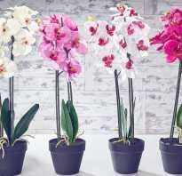 Как пересаживать орхидею