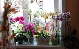 Пересадка орхидеи видео