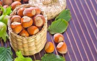 Какая польза от орехов фундук