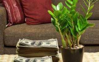 Долларовое дерево как правильно называется