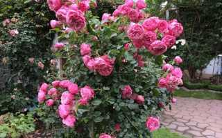 Роза леонардо да винчи энциклопедия