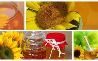 Чем полезен подсолнечный мед