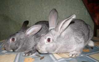 Все болезни кроликов с фото и описанием