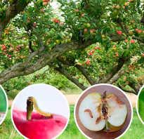 Защита яблони от вредителей и болезней