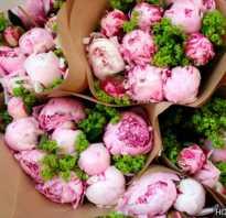 Пион фото цветов