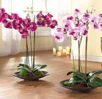 Орхидеи уход в домашних условиях полив пересадка