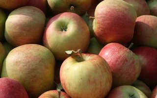 Яблоко чемпион описание сорта