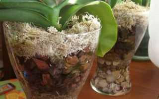 Пересадка орхидеи в больший горшок