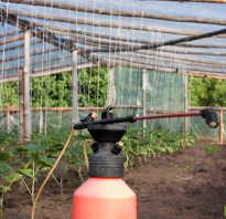 Как правильно удобрять огурцы в теплице
