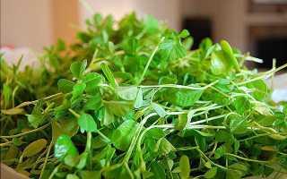 Ореховая трава приправа применение