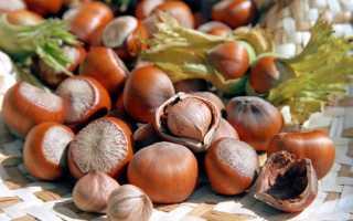 Как посадить орех фундук в домашних условиях