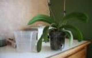 Как пересадить орхидею видео
