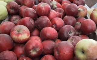 Сладкие яблоки сорта