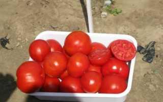 Лучшие голландские сорта томатов для теплиц