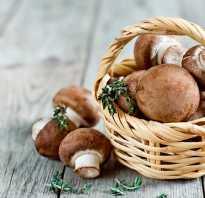 Названия грибов с картинками