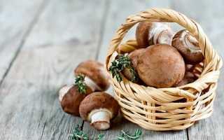 Какие бывают грибы картинки и названия