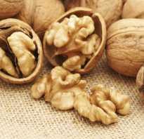 Водка на перегородках грецкого ореха польза