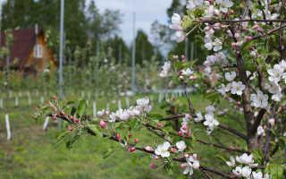 Мороженные яблоки польза и вред
