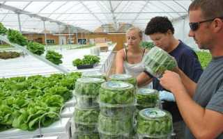 Что выгодно выращивать в теплице зимой