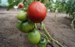 Как пасынковать томаты в теплице видео