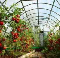 Помидоры семена лучшие сорта для теплицы подмосковья