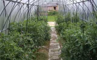 Правильная подвязка помидор в теплице
