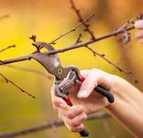Обрезка вишни весной
