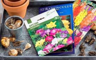 Когда сажать лилии и гладиолусы