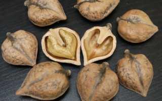 Сердцевидный орех фото