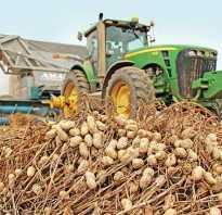 Где растет орех арахис