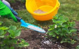 Удобрения для клубники