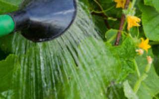 Температура воды для полива огурцов в теплице