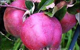 Яблочный уксус из яблочного сока