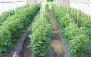 Подвязка растений в теплице из поликарбоната