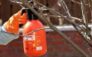 Опрыскивание деревьев осенью от вредителей