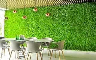 Как вырастить мох ягель в домашних условиях