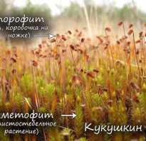 На какой картинке изображен мох