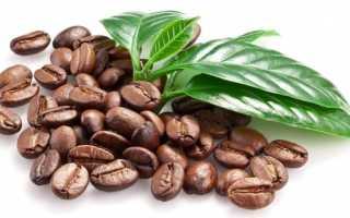 Болезни кофейного дерева в домашних условиях фото