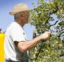Защита груши от вредителей и болезней