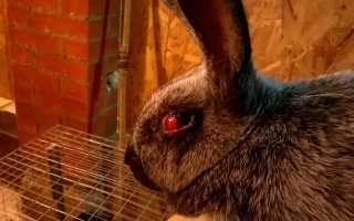 Болезни глаз у кроликов фото и описание