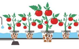 Раствор для гидропоники томатов своими руками