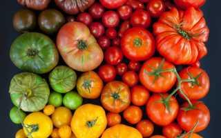 Виды томатов фото с названиями