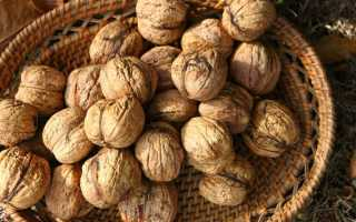 Грецкий орех крупноплодный