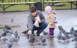 Болезни от голубей опасные для человека
