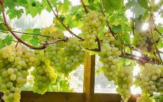 Теплицы для винограда