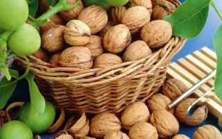 Схема посадки грецкого ореха идеал