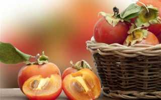 Хурма выращивание в домашних условиях