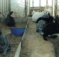 Содержание кроликов в теплице