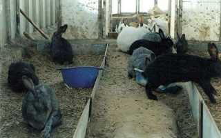 Кролики в теплице зимой